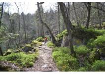 Rennen auf dem Waldweg