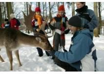 Winterlicher Familienausflug - Tierfütterung (c) Wildparadies Tripsdrill