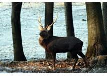 (c) Wildpark Daun