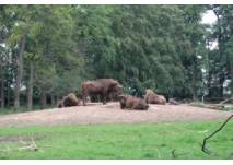 Wildpark Pforzheim (c) alex grom