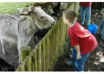 Wildpark und Haustierpark Bremervörde-Spreckens