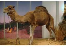 Im Zoologischen Forschungsmuseum Alexander Koenig