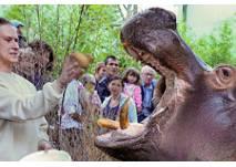 (c) Zoo Frankfurt