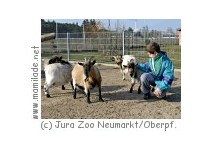 Jura-Zoo Neumarkt