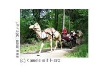 Ebhausen-Rotfelden Kamel-Kutschfahrten