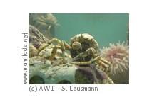 Biologische Anstalt Helgoland Aquarium