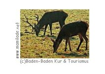 Baden-Baden Wildgehege
