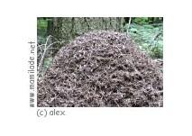 Engstingen Ameisenlehrpfad