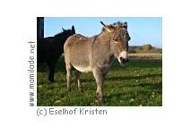 Krumstedt Eselhof Kristen Kutschfahrt