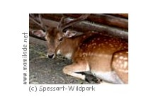Spessart-Wildpark
