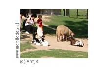 Kindergeburtstag im Zoo Stralsund