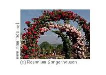 Kinderführung Europa Rosarium Sangerhausen