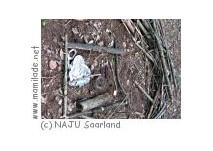 Kindergeburtstag bei der  Naturschutzjugend (NAJU) Saarland