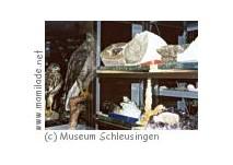 Kindergeburtstag Naturhistorisches Museum Schleusingen