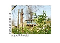 ASP Forcki