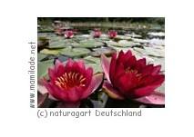 NaturaGart Deutschland