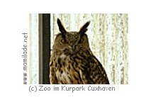 Uhu im Zoo Cuxhaven
