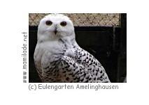 Eulengarten Amelinghausen