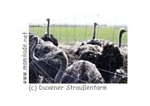 Duxener Straußenfarm