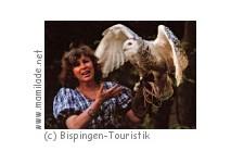 Greifvogel Gehege Bispingen