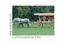 Römischer Reisewagen im Naturzentrum Eifel