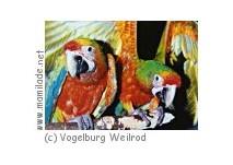 Weilrod Vogelburg