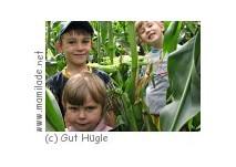 Maislabyrinth Gut Hügle