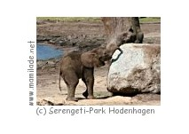 Serengeti Tierpark
