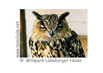 Wildpark Lüneburger Heide Greifvogel Flugvorführung