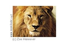 Erlebniswelt Sambesi  im Zoo Hannover