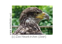 Greifvögel Flugshow Zoo Neunkirchen (Saar)