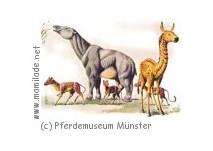 Westfälisches Pferdemuseum Hippomaxx in Münster