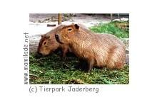 Tier- und Freizeit-Park Jaderberg