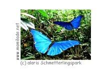 alaris Schmetterlingspark Uslar