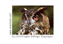 Greifvogel-Gehege Bispingen