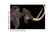 """Erlebnisausstellung """"Planet Erde"""" auf Fehmarn"""
