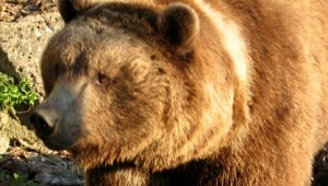 Grafenau Bärenpfad