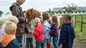 Pferde-Erlebniskurs am Harderhof