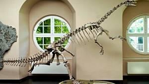 kindergeburtstag im naturkundemuseum kassel mamilade ausflugsziele. Black Bedroom Furniture Sets. Home Design Ideas