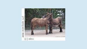 Neumünster Tierpark Kindergeburtstag