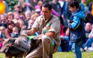 Geburtstagskind ist Ehrengast in der Flugshow im Weltvogelpark Walsrode