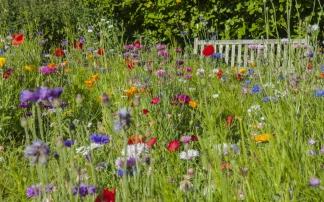 Blumengarten Bexbach