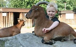 Tierpark Bochum Kindergeburtstag