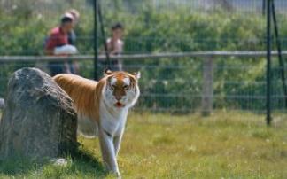 Kindergeburtstag im Erlebnis- und Tigerpark Dassow