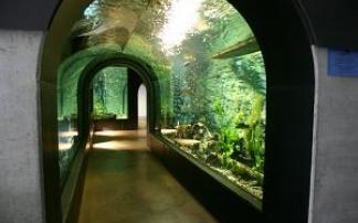 Glasröhre Aquarium