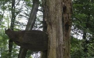 Gernsbacher Sagenweg (c) alex grom