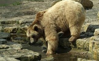Tierbeobachtungen im Tierpark Gotha
