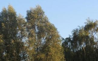 Waldlehrpark bei Groß Woltersdorf