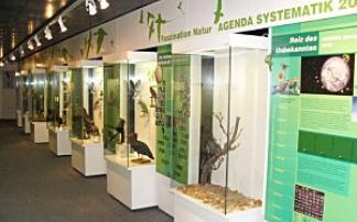 Museum Heineanum in Halberstadt