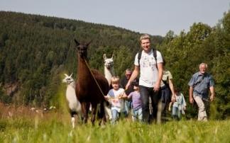 Lamatrekking im Erzgebirge